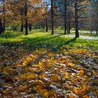 """Осень в парке"" :: Александр"