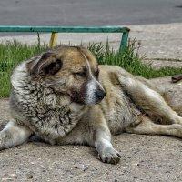Городская бездомная. :: Анатолий. Chesnavik.