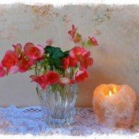 Бегония и свеча :: Nina Yudicheva
