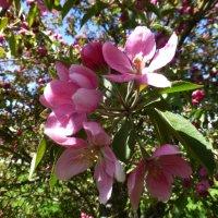 Весна в городе :: Наиля