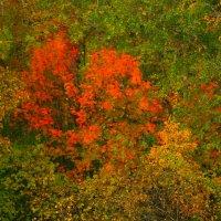 Осенний лес :: Юрий Николаев