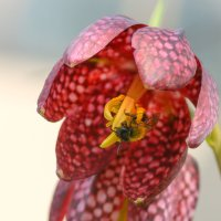 цветение крокусов :: Дмитрий Брошко