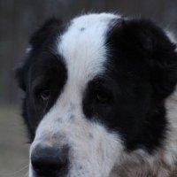 Мой верный пёс :: Анна Владимировна Ёлкина