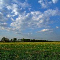 Рапс и облака... :: Юрий Анипов