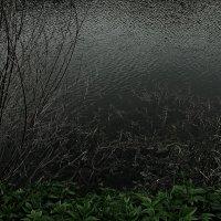 ..в омуте.,в поисках водяного.. :: ЕВГЕНИЯ