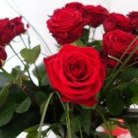 """""""Розовый букет прекрасный свежий Восхищает и волнует кровь..."""" :: Galina Dzubina"""