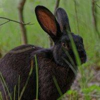Кролик не заяц :: PROBOFF-Est (Rost Prii)
