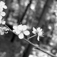 Ожидание лета :: Надежда Бахолдина