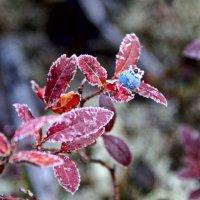 Сентябрь, первые заморозки :: Alexander Dementev