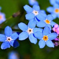 Вот такие цветики... :: Vladimir Semenchukov