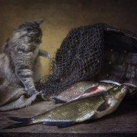 Вау, сколько рыбы! :: Ирина Приходько