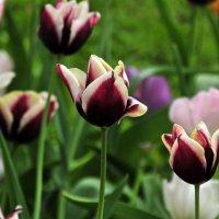 Цветы под окном... :: Валерий Подорожный