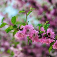 Цветочный рай. :: Виктор Иванович