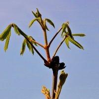 Апрельский крякозябл :: Светлана