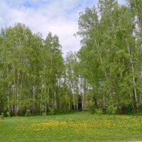 Весна в разгаре. :: Мила Бовкун