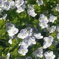 Маленькие цветочки на газоне. :: Наталья Владимировна