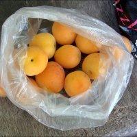 Вот и первые абрикосы! :: Нина Корешкова