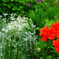 Во саду, ли в огороде...) :: Любовь К.