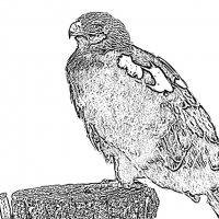 степной орел :: Юлия Денискина