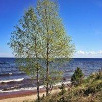 Ладожское озеро :: Елена Павлова (Смолова)