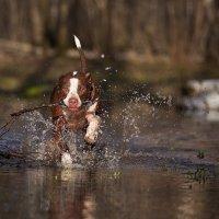 Гулять по воде :: Лена Рихтер