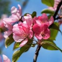 Краски весны :: Валерий Пегушев