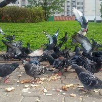 городские птички :: Elena Kornienko