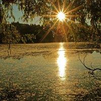Озеро в пуху :: Alexander Andronik