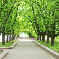 Деревья :: Павел Сущёнок