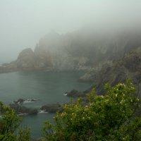 В тумане. :: Сергей
