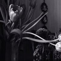 Туманным абрисом на  бледной стене - овалы  старых  фото.... :: Валерия  Полещикова