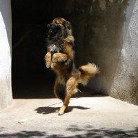 Ожидание по собачьи. :: Olga Grushko