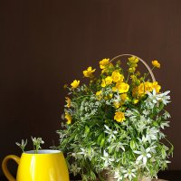 Полевые цветы. :: alfina