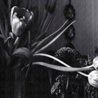 Тень старых фотографий.... :: Валерия  Полещикова