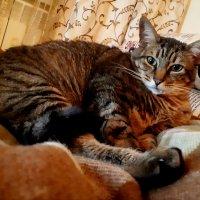Бремя кота :: Алина Веремеенко
