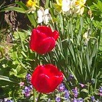 Весенние цветы. :: Светлана Калмыкова