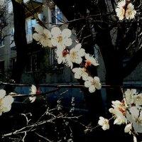 Весеннее цветение. :: Владимир Бочкарёв