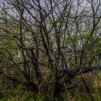 дерево :: Юлия Денискина