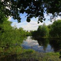 Лесное озеро :: Андрей Лукьянов