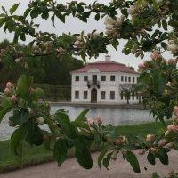 Петергофская весна :: Оксана Ярёменко