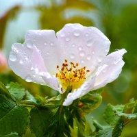После дождика :: Nina Streapan