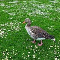 Парк цветов в мае (серия). Ценитель прекрасного :: Nina Yudicheva