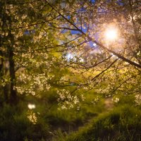 Лучик света :: Юлия Ларина