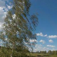 Ветреный день :: Ольга