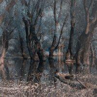 Совет вожаков заколдованного леса :: Евгений Никифоров