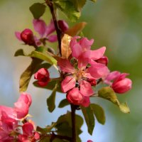 Вокруг меня цветущий майский сад... :: Ольга Русанова (olg-rusanowa2010)