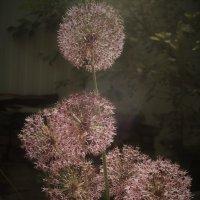 Неземные цветы :: Gal` ka