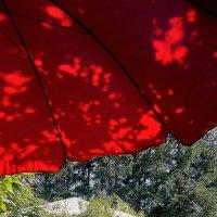 Под красным зонтом в знойный день :: Валерий Розенталь