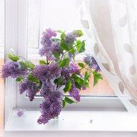 ...на моем окне... :: Виктория Колпакова