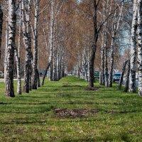 Солнечный майский день. г. Кемерово :: Владимир Деньгуб